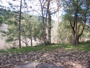 Klamath Forest Trees