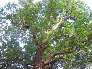 Nice, Cheery, Dependable Tree